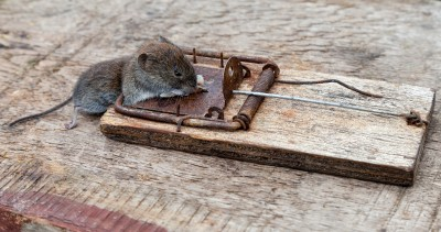 pest control may be necessary