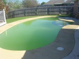 green pool water from algae