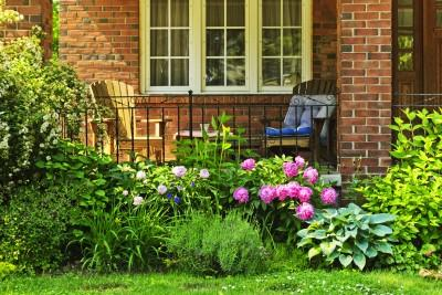 landscaping plants and shrubs
