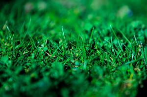 earth friendly natural green lawn
