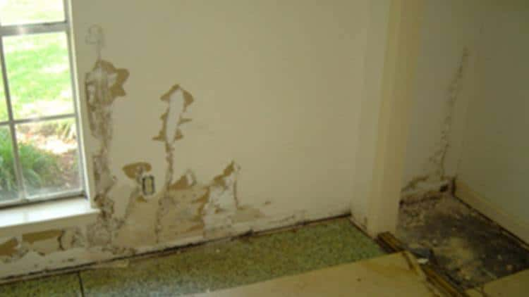 termite paths in drywall can be exposed using an awl