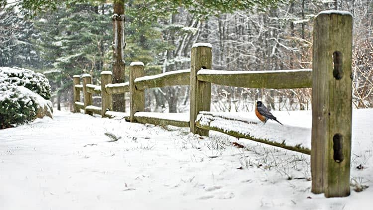 split rail fence in winter with bird