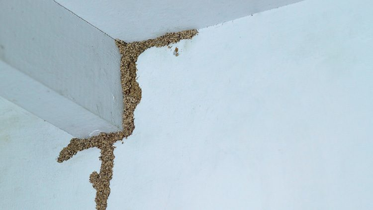 termite infested house with undeterred termite growth